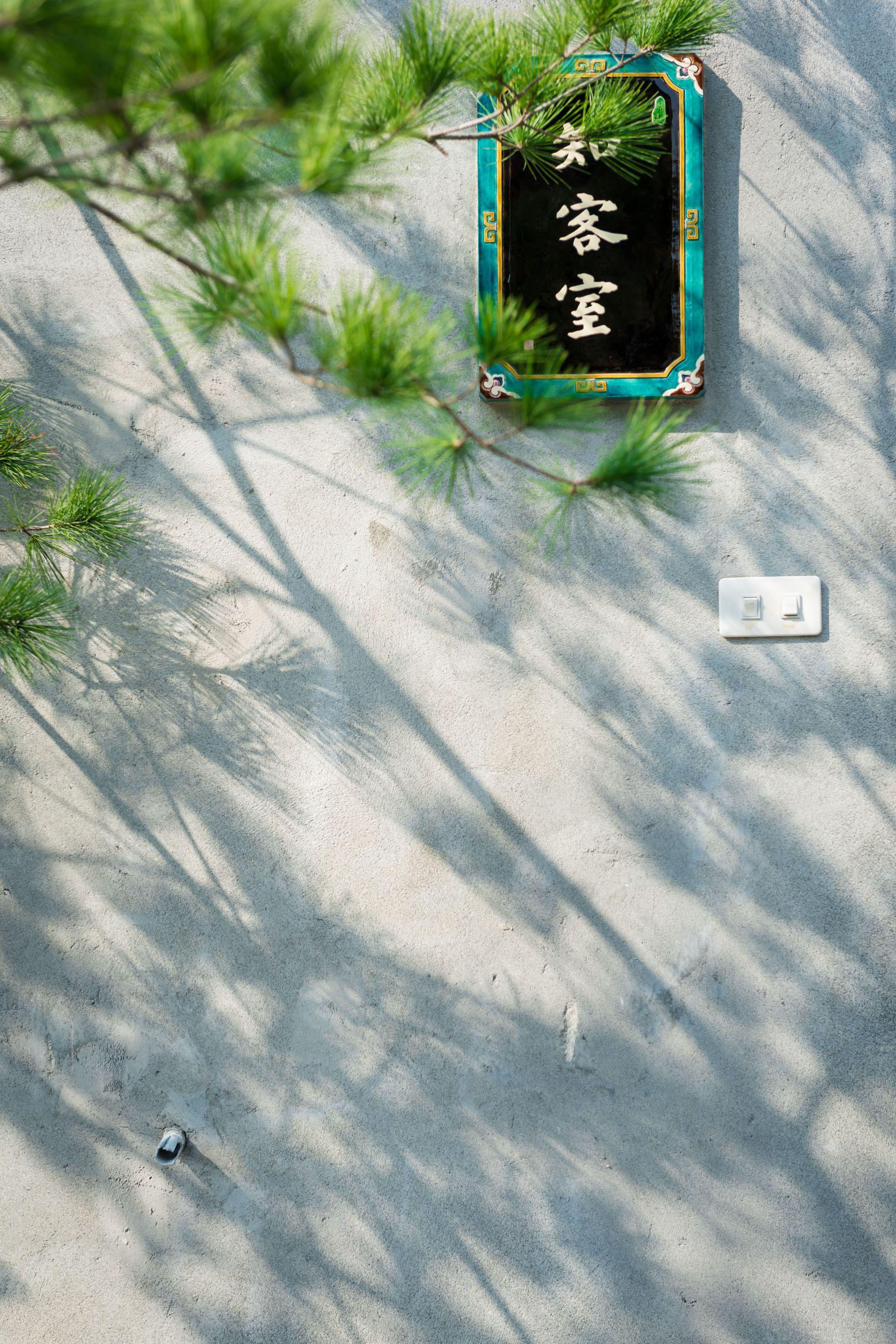 樹影與知客室的交會