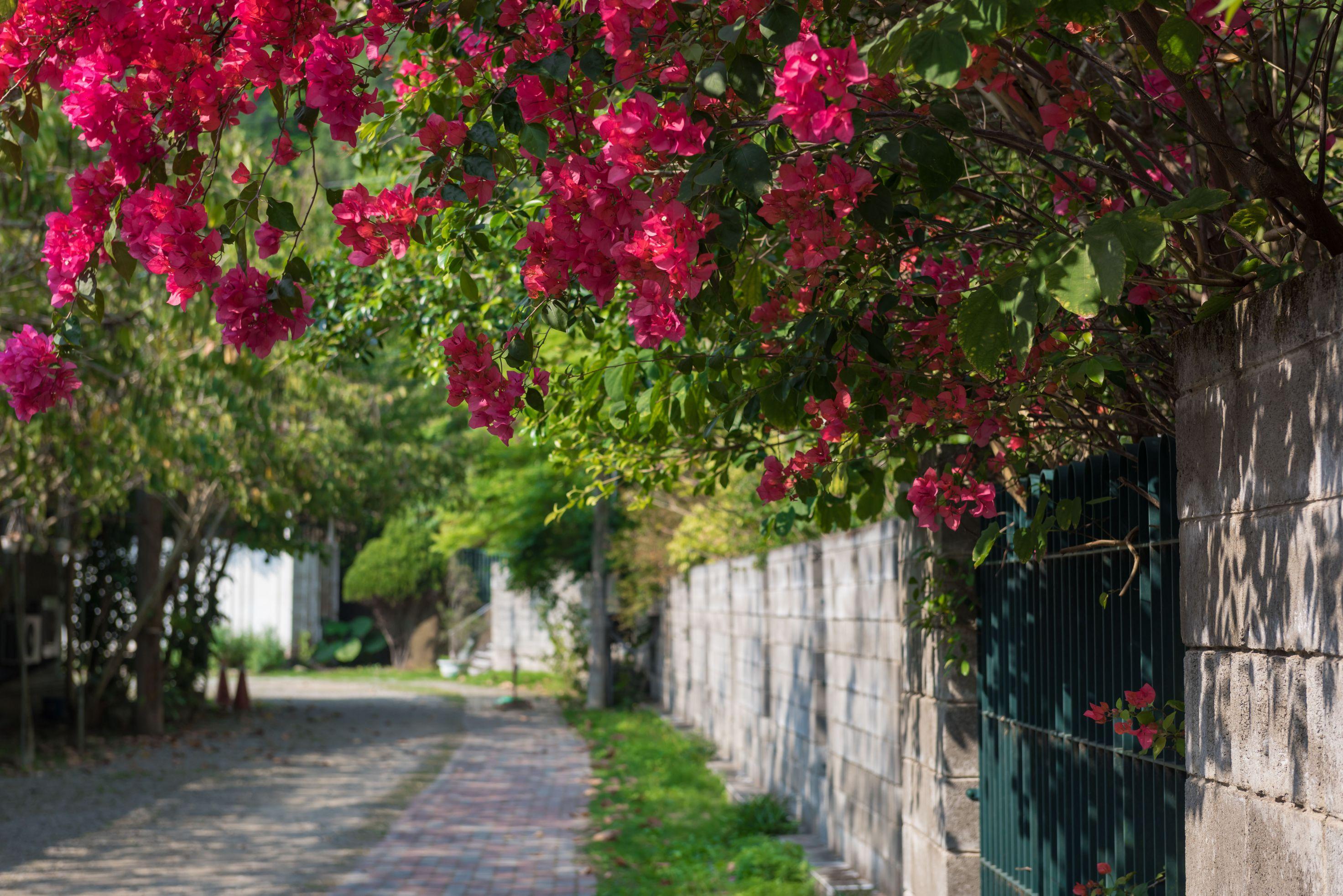 經行步道旁的小風景