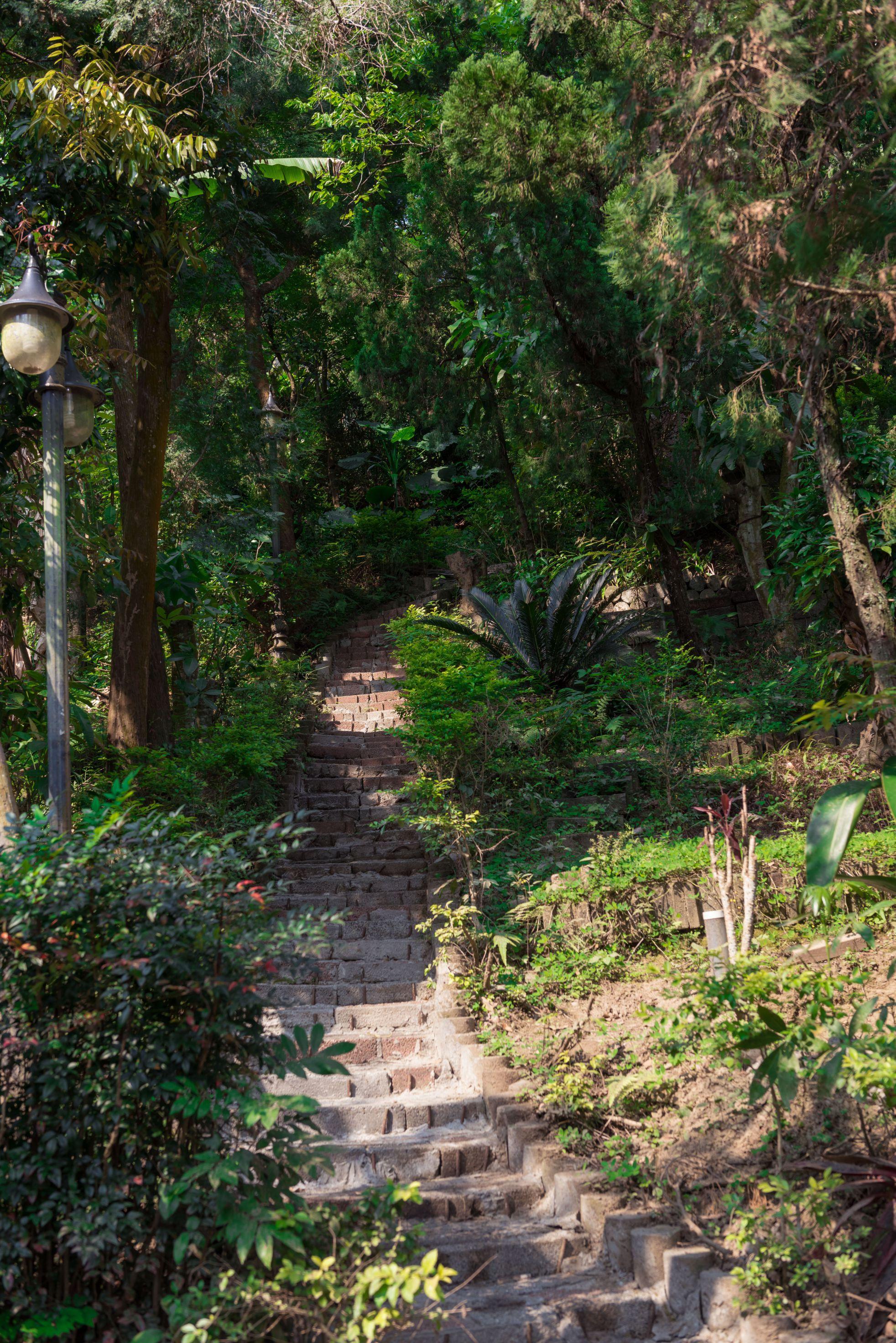 通往山房的林中小徑