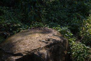 登山步道旁的石塊與森林