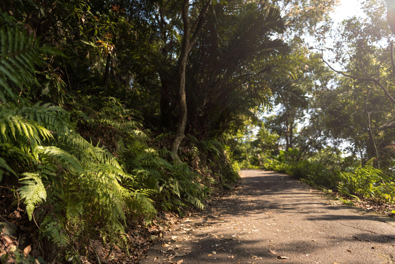 與登山客結緣的步道一隅,願踏之眾生皆得祝福